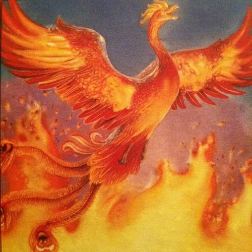 Common phoenix fantastic beasts wiki fandom powered by wikia common phoenix voltagebd Gallery