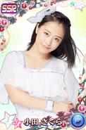 Oda SakuraSSR17