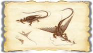 Dragons BOD Change Gallery Image 04