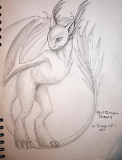 Draginfli's Frill Dragon