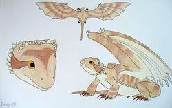 Draginfli's Bearded Dragon