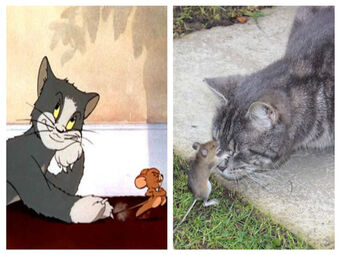 Tom And Jerry Are Animated And Real Life But There S Always A Cat And A Mouse Instagram Stuff Hub Ideas Wiki Fandom
