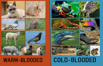 Animals in fact chart - warm and cold-blooded (Blogspot stuff) | Hub Ideas  Wiki | Fandom