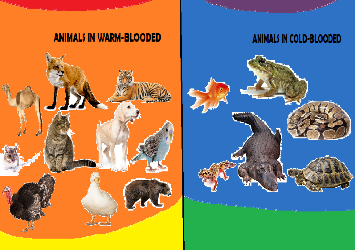 Animals in Warm-Blooded and Cold-Blooded (Instagram stuff) | Hub Ideas Wiki  | Fandom