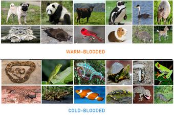 Warm-Blooded and Cold-Blooded Animals (Blogspot stuff) | Hub Ideas Wiki |  Fandom