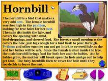 Buzzy's Information about the Jungle Hornbill Bird