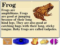 Buzzy's research facts about the farm pond frogs