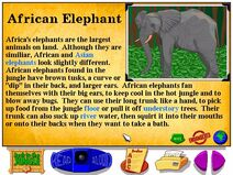 Buzzy's Information about African elephants