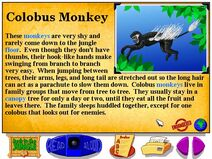 Buzzy's Information about the African Jungle Colobus Monkey