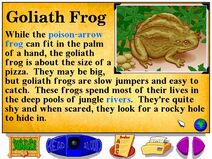 Buzzy's Information about the Goliath Frog