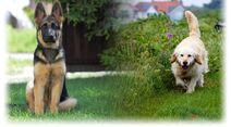 HundeWikia-Hintergrund