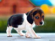 BeagleWelpe