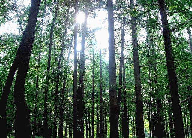 File:Forest Osaka Japan.jpg