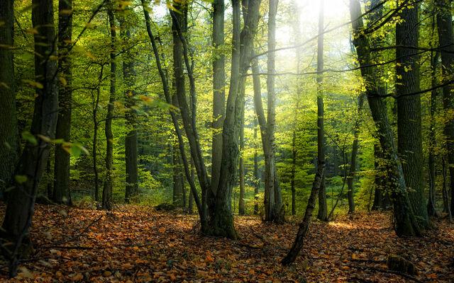 File:Fairy-forest.jpg