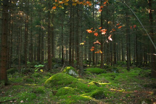 File:Färnebofjärden forest Mattön.jpg