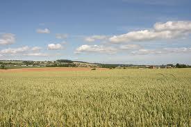 File:Wheat Field.jpg