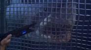 Shark-cage