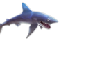 Mako Shark (HSE)