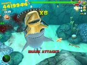 Yolo shark