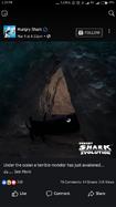 Mystery Shark(1)