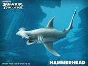 Hamerhead shark