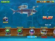 Baby Mako Shark