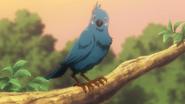 Bird zevil