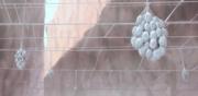 Huevos de Aguila tarantula