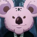 Koala CA Portrait