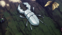 King Great White Beetle