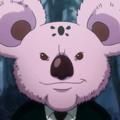 Koala rostro