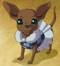Alisa Clairmonts dog