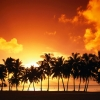 Sundown over palms