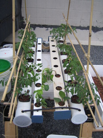 File:Solar DFT with Plants.jpg