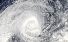 Cyclonemichelleaus