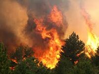 Wildfire (5)