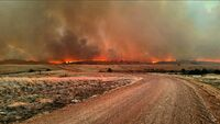 Wildfire (7)