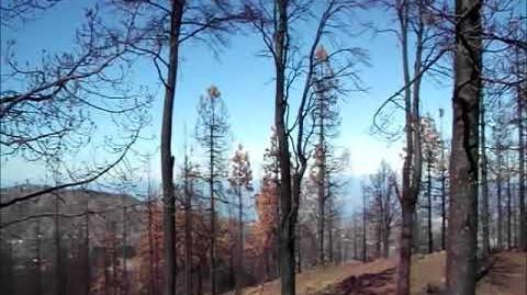 Trágico incendio de Tejeda,un mes y medio después