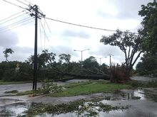1024px-Tree and power line damage in Parap