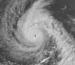 Typhoon (15).jpg