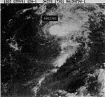 Tropical Storm Arlene (1981).jpg