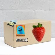 The SBOX