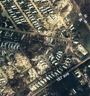 Edmonton-evergreen-damage