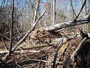 Fentress EF1 TN tornado damage 2009