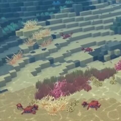 Kraby po wodą.