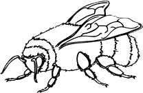 File:Bee.png