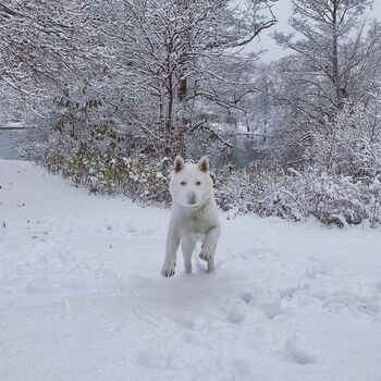 Ghost in Snow