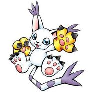 Gatomon Ringless b