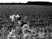 Elmo riding ernie uncyclopedia