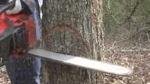 Cut a Tree Down Safely